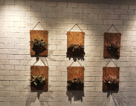 Not sure if these are live plants but seeing that they're hung in the smoking area, I guess they are